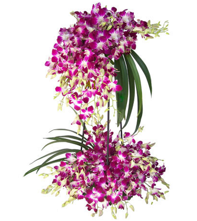 Beautiful Orchids Arrangement Orchids Amazing Flowers Orchid Arrangements