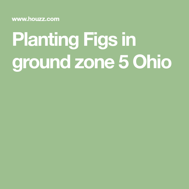 Planting Figs In Ground Zone 5 Ohio Zone 5 Fig Plants