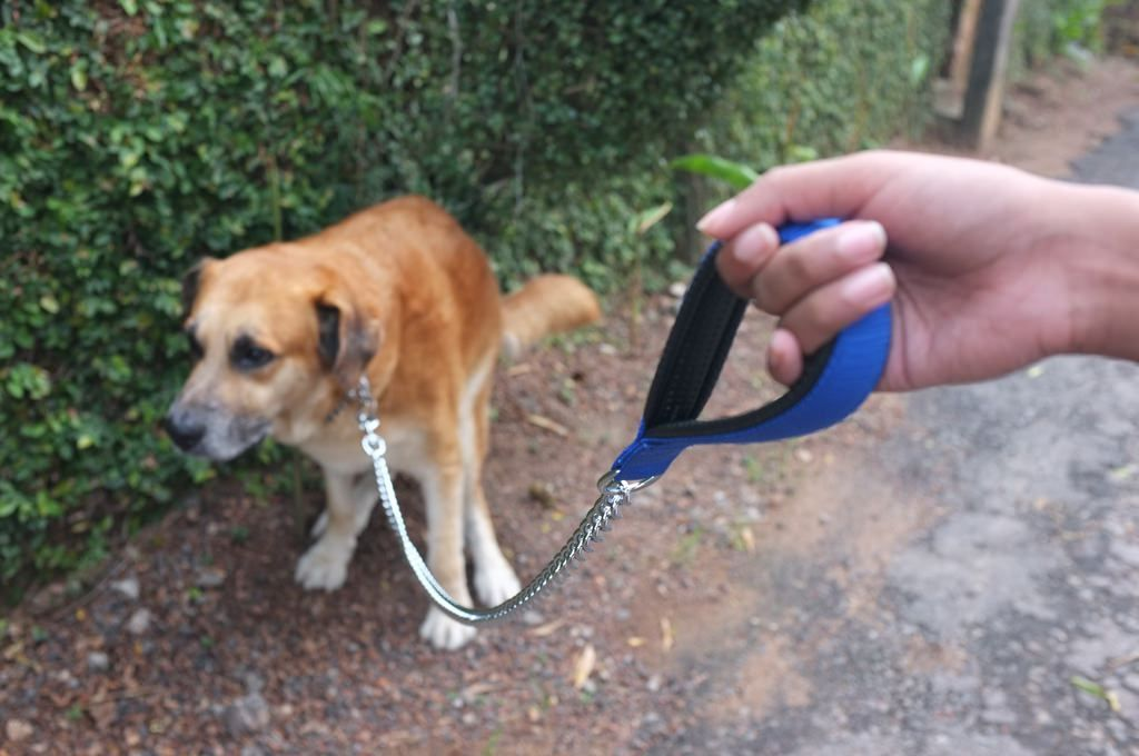Cleaning up after your dog neighborly or liberal hoax