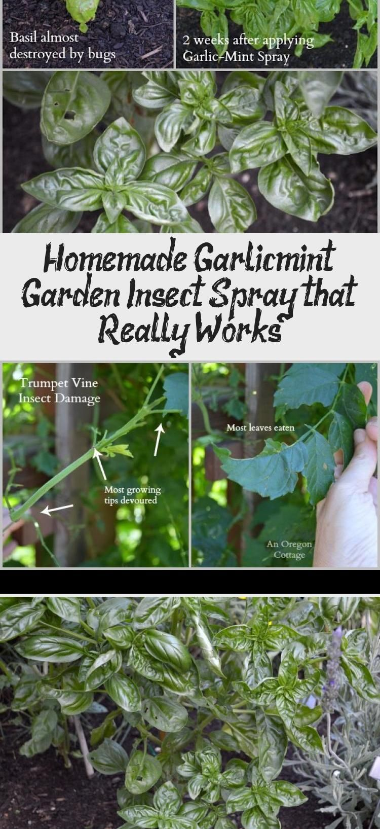 Easy to make and use homemade garlicmint garden insect