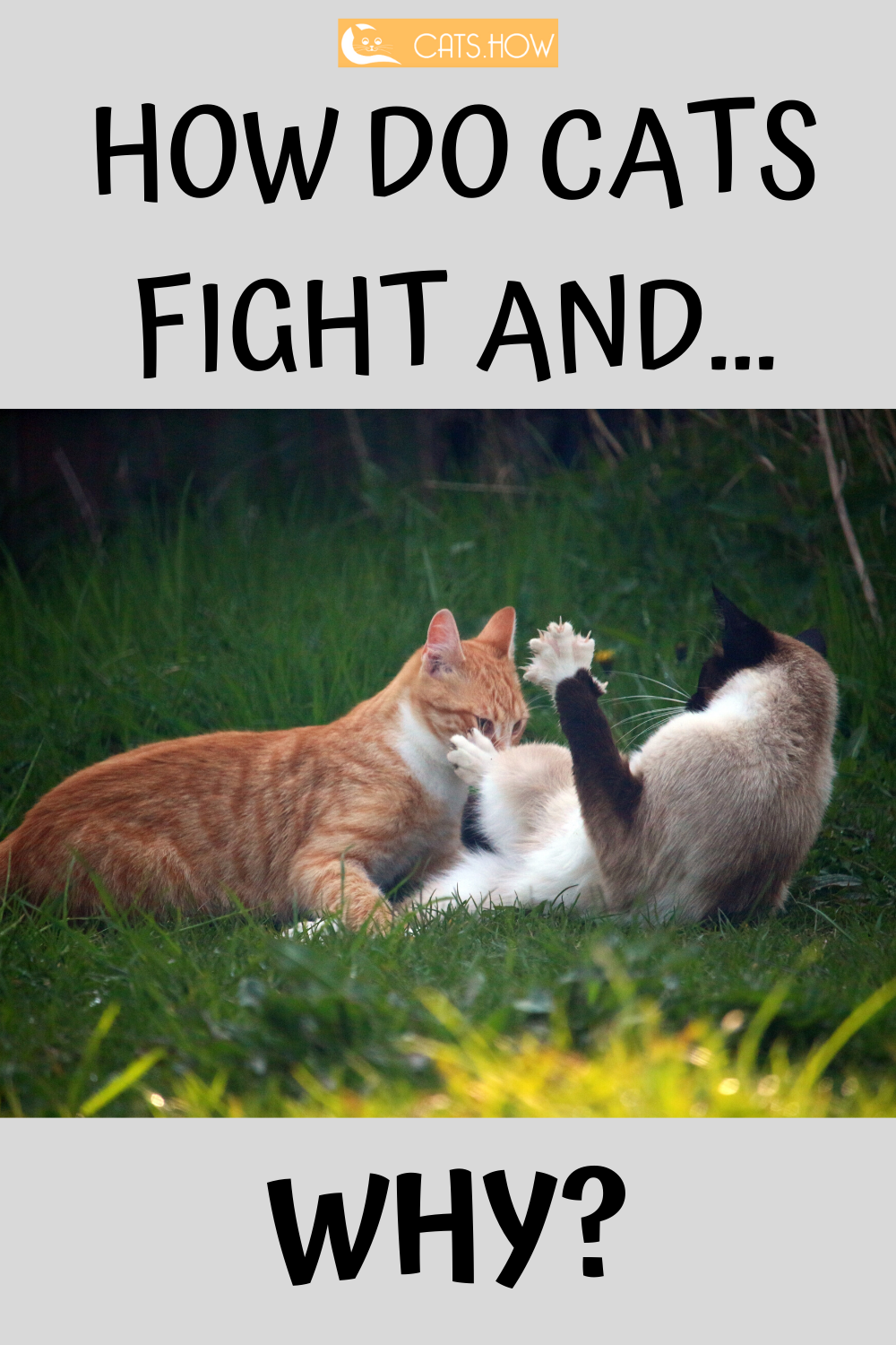 We're sure you've seen cats fighting each other. Or