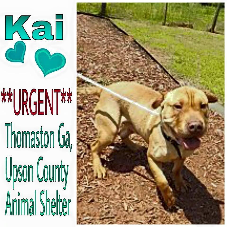 Please Adopt Thomaston Ga Meet Kai, he is a wonderful