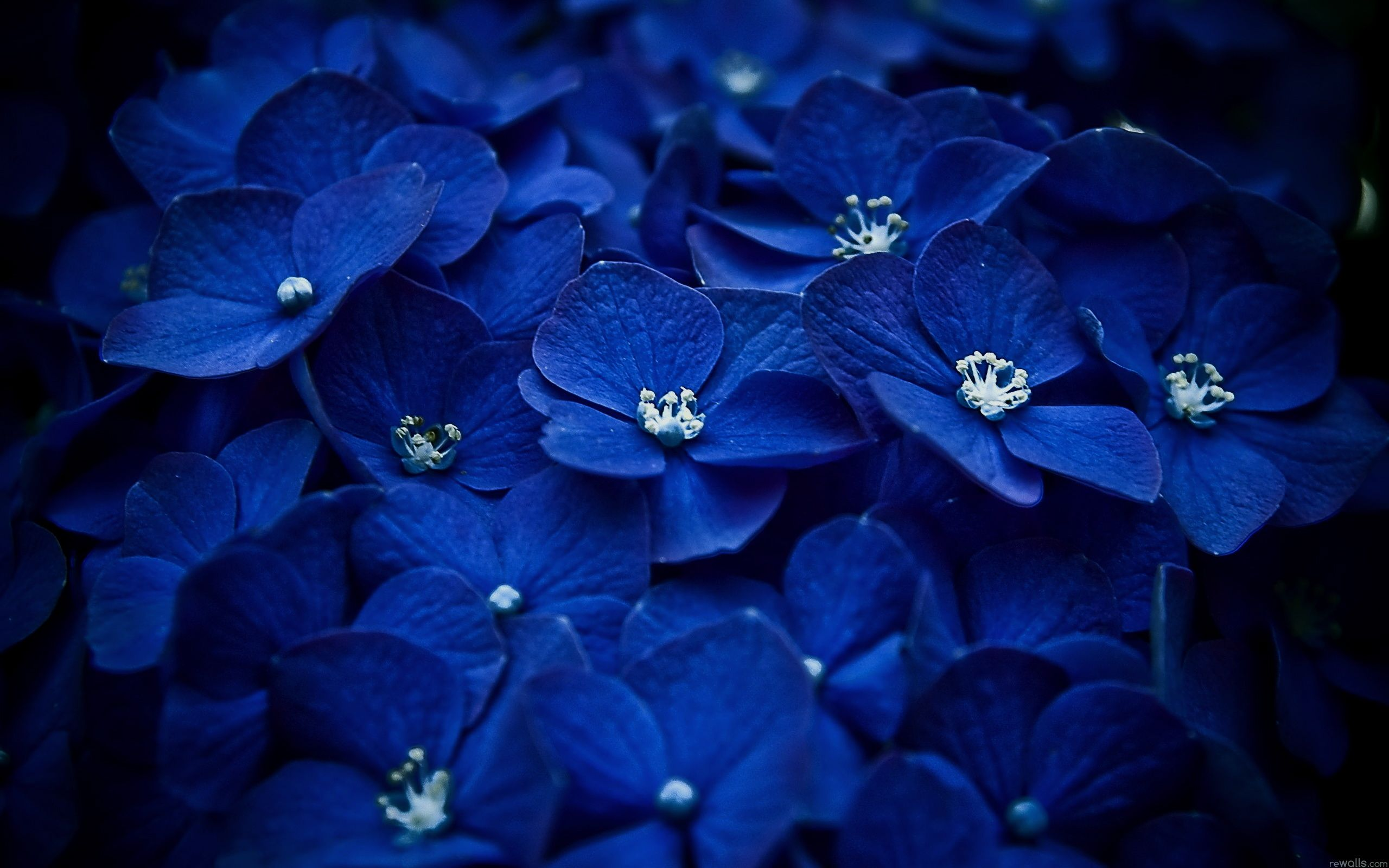 Computer Wallpapers Wallbase Cc Blue Flower Wallpaper Blue Flowers Flower Wallpaper