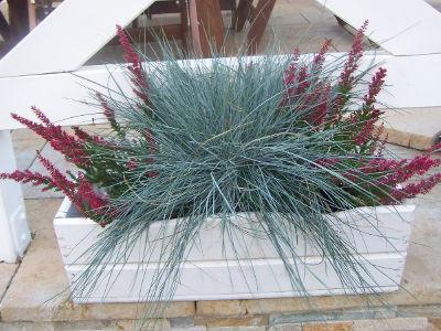 Trawy Ozdobne Na Balkon Jakie Trawy Sadzic W Doniczkach Holiday Decor Christmas Tree Skirt Christmas Wreaths