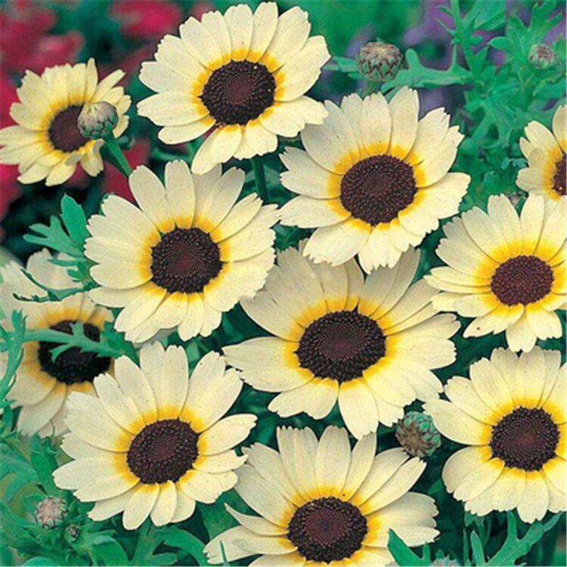 maypop passion flower zone
