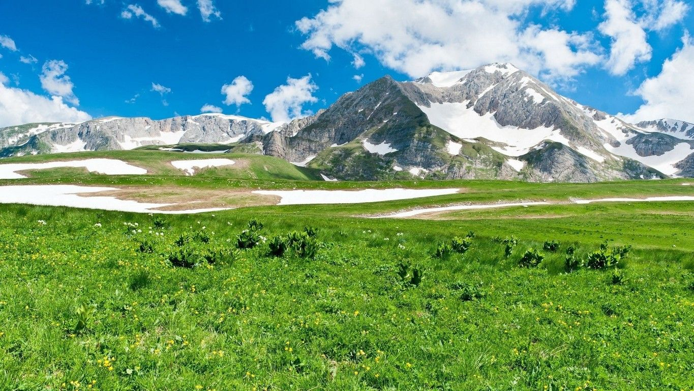 Green Meadow Green Meadow And Snowy Mountains Wallpaper Best Nature Wallpapers Landscape Scenery Scenery