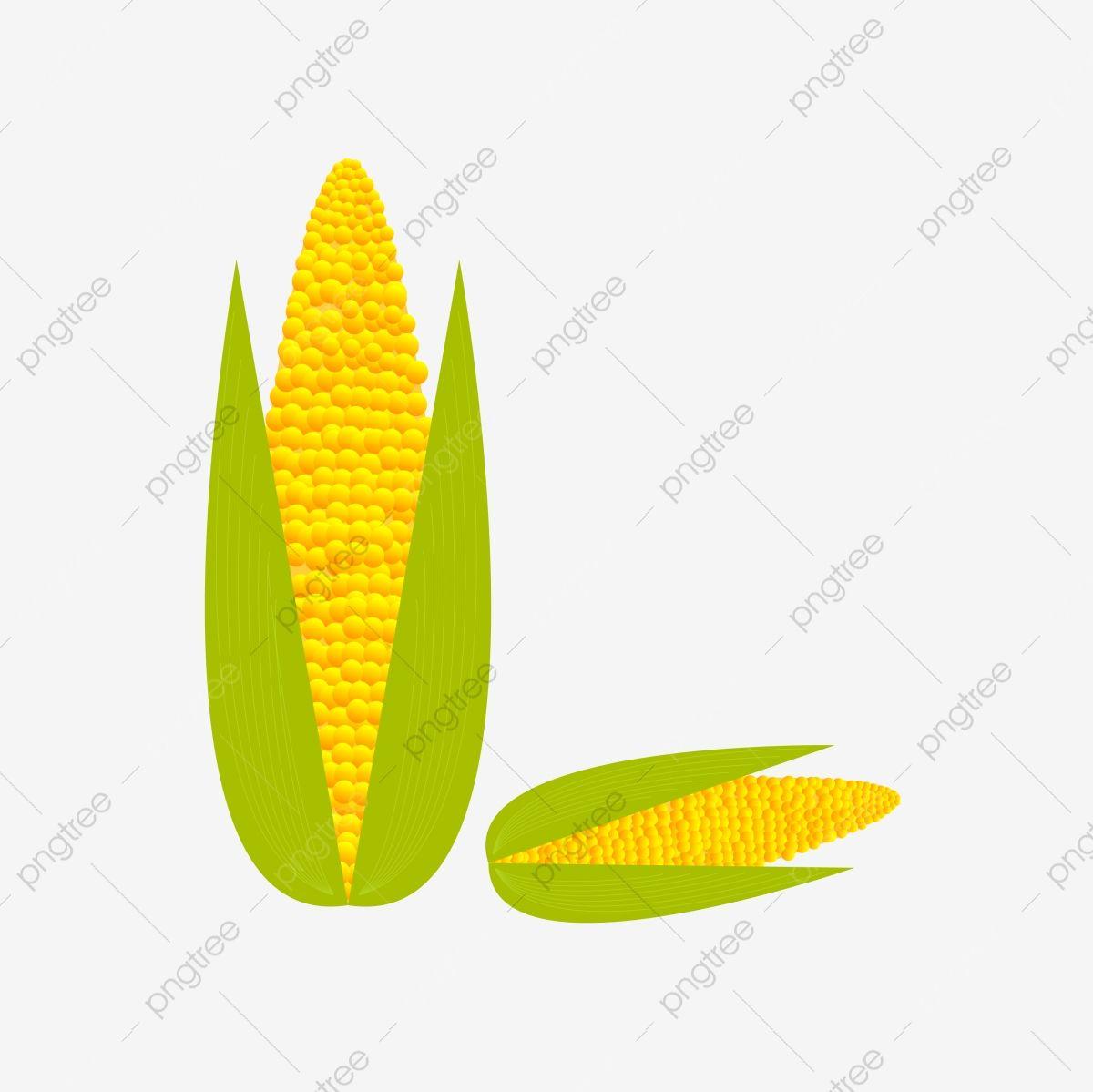 Los Cultivos De Maiz Fresco De Dibujos Animados Dibujos Animados Fresco Maiz Png Y Vector Para Descargar Gratis Pngtree Maiz Dibujo Maiz Dibujos