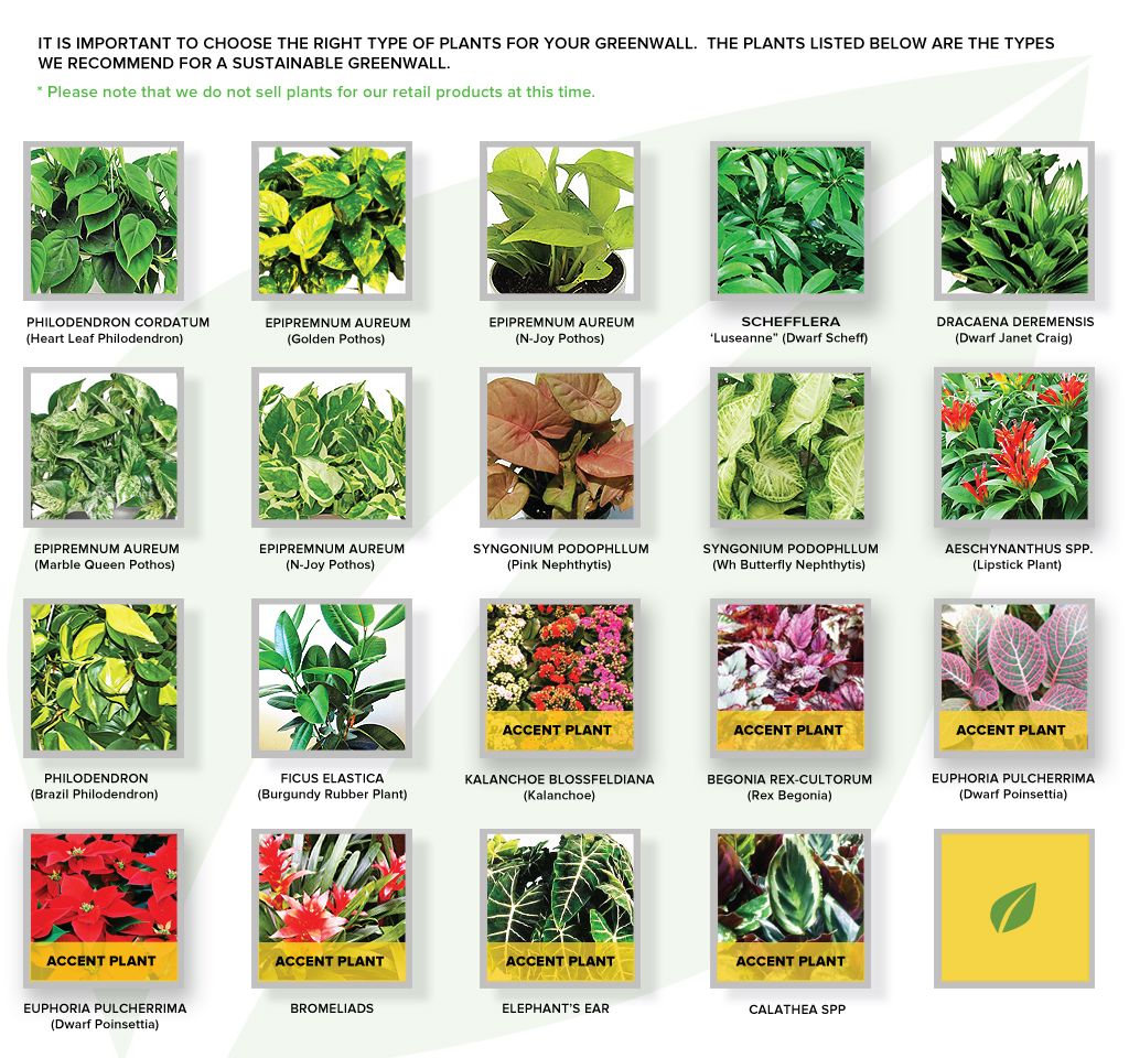 Calvin flowers art chart test indoor plant wall pinterest plant species plants and for A gardener is planting two types of trees