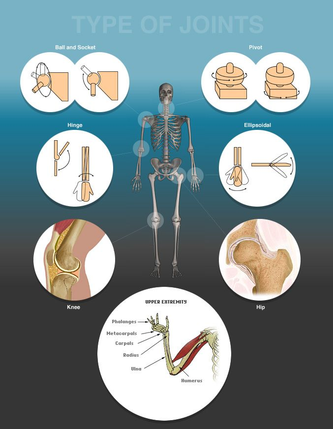 Types Of Joints In Human Body Orthopedic Specialist Houston Tx