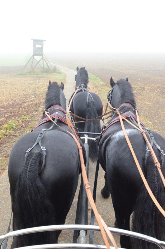 Einhorn Lehrgang - Der Spezialist für Friesen Pferde seit 35 Jahren