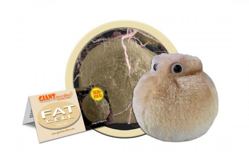 Fat Cell Plush With Our Little Personal Trainer Around Youll Always Be Watching Your Weight