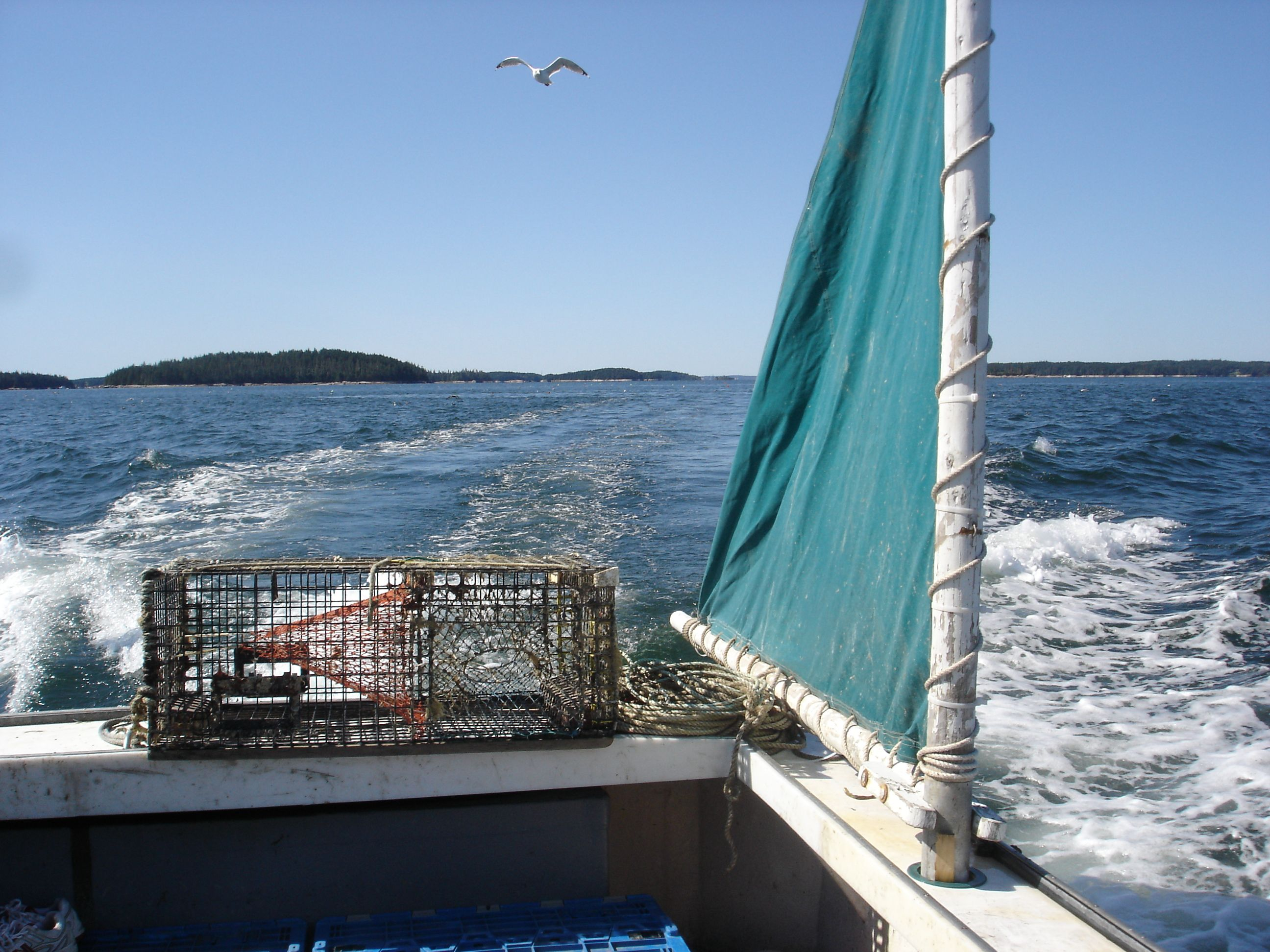 View from the stern of a Maine lobster boat on the rockbound coast of Maine.