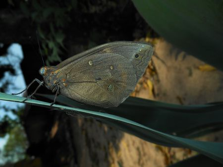 """"""" IMPOSING BUTTERFLY """" Photo by PAULO GRACINDO M. — National Geographic Your Shot"""