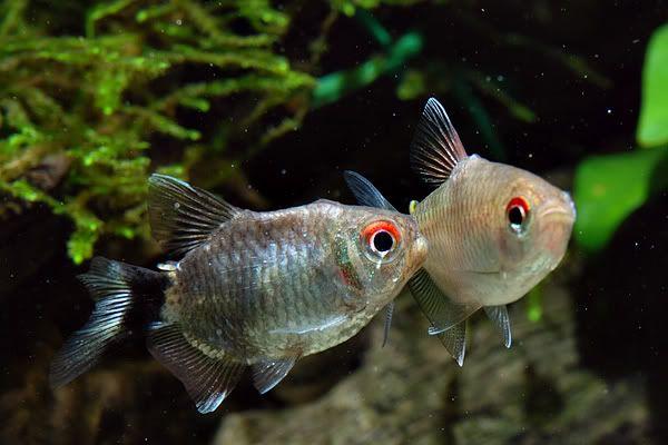 Mac Forum 2 0 View Topic My 2ft El Cheapo Tank Freshwater Aquarium Life Aquatic Fish Pet