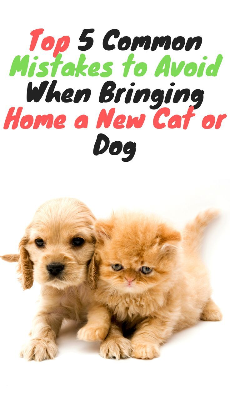 Common Mistakes To Avoid When Bringing Home A New Cat Or Dog Cat Kittens Dogs Dog Pet Puppies Cats Dog Care Pets Dog Cat