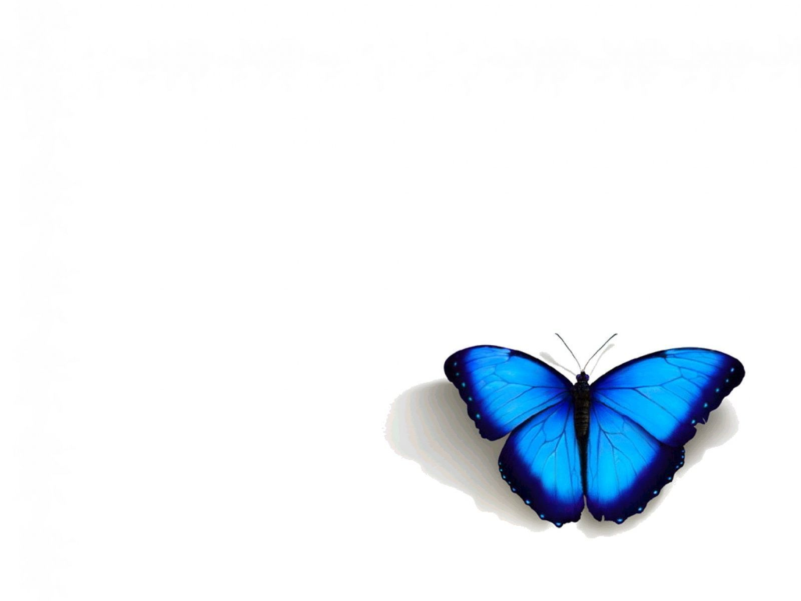 ideas about Butterfly Wallpaper Iphone on Pinterest 1024× ...