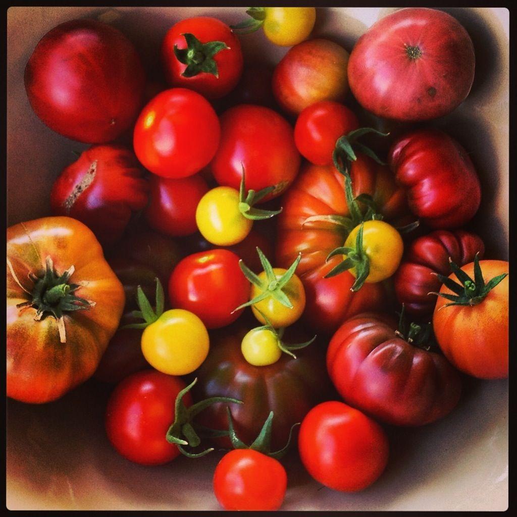Tomatsuppe med drivhustomater