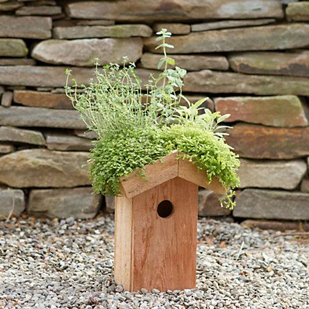 green roof birdhouse ++ terrain