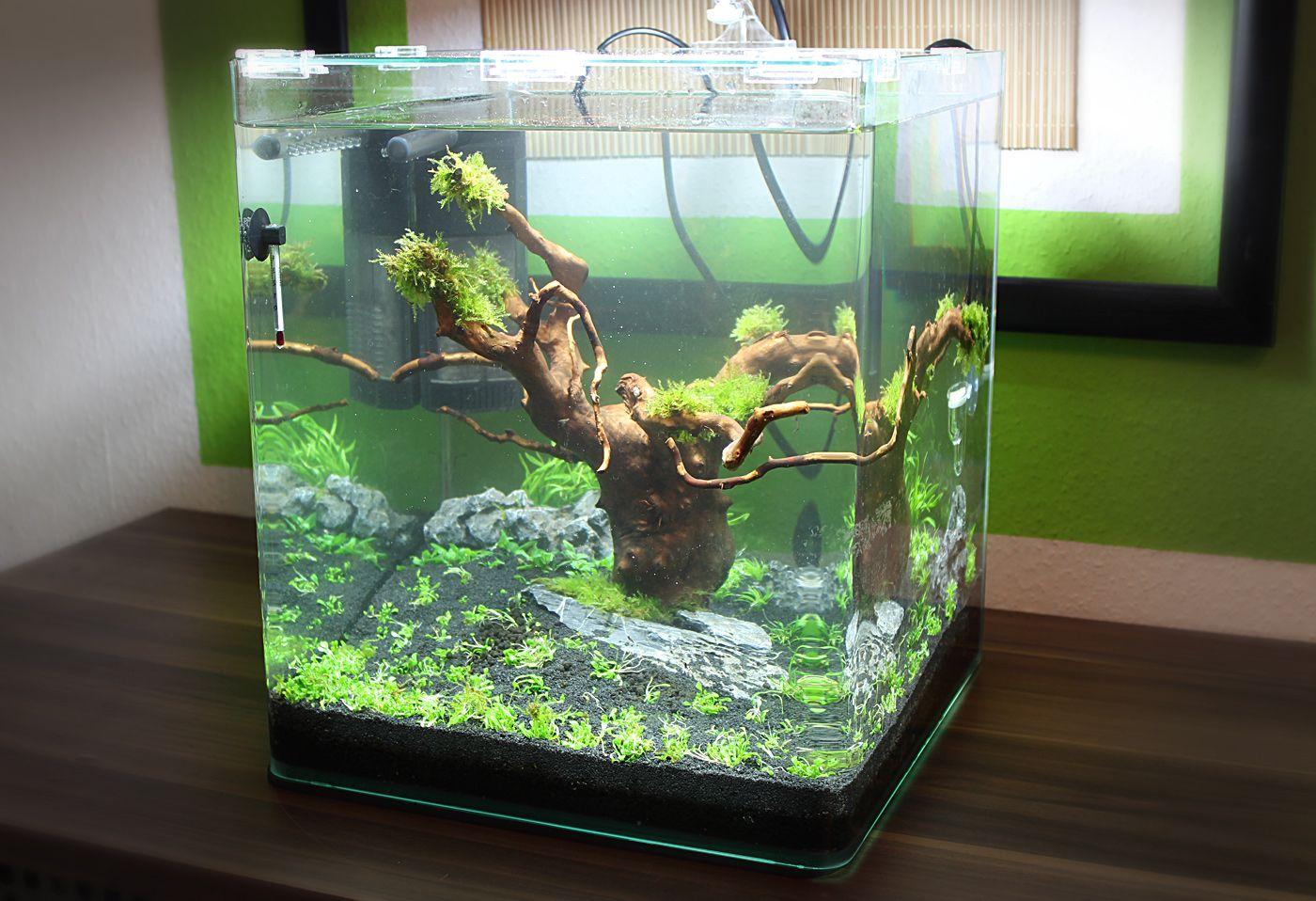 Nano cube tag 2 for Kampffisch aquarium
