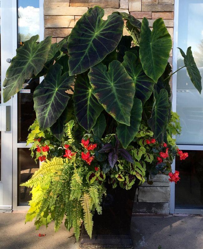 Pin de Irina Markina en Растения Pinterest Plantas, Macetas para - maceteros para jardin