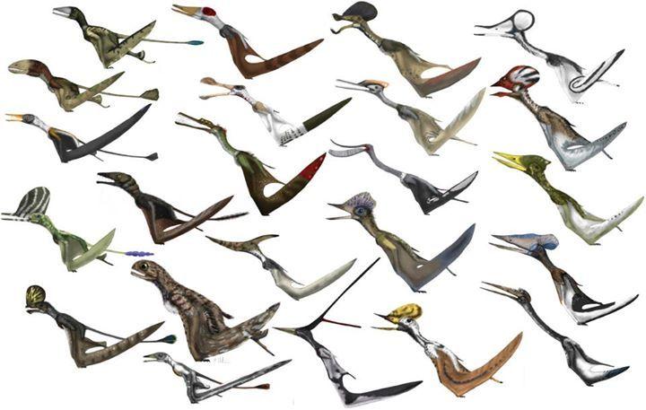 Pterosaurs+Witton+Assortment.jpg (720×457)