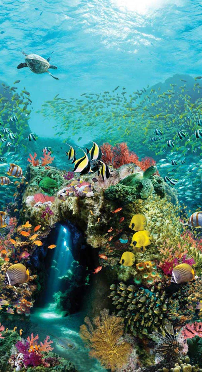 Panel Beneath The Wave Digital Ocean Reef P4344 73 4344731706 In 2020 Beautiful Ocean Pictures Beautiful Sea Creatures Ocean Print