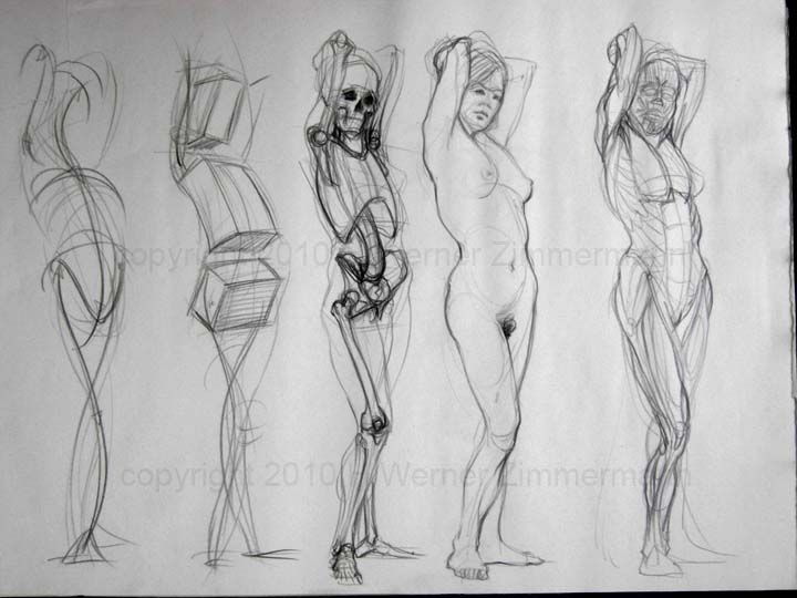 Werner Zimmerman - wonderful line drawing study of the female form ...