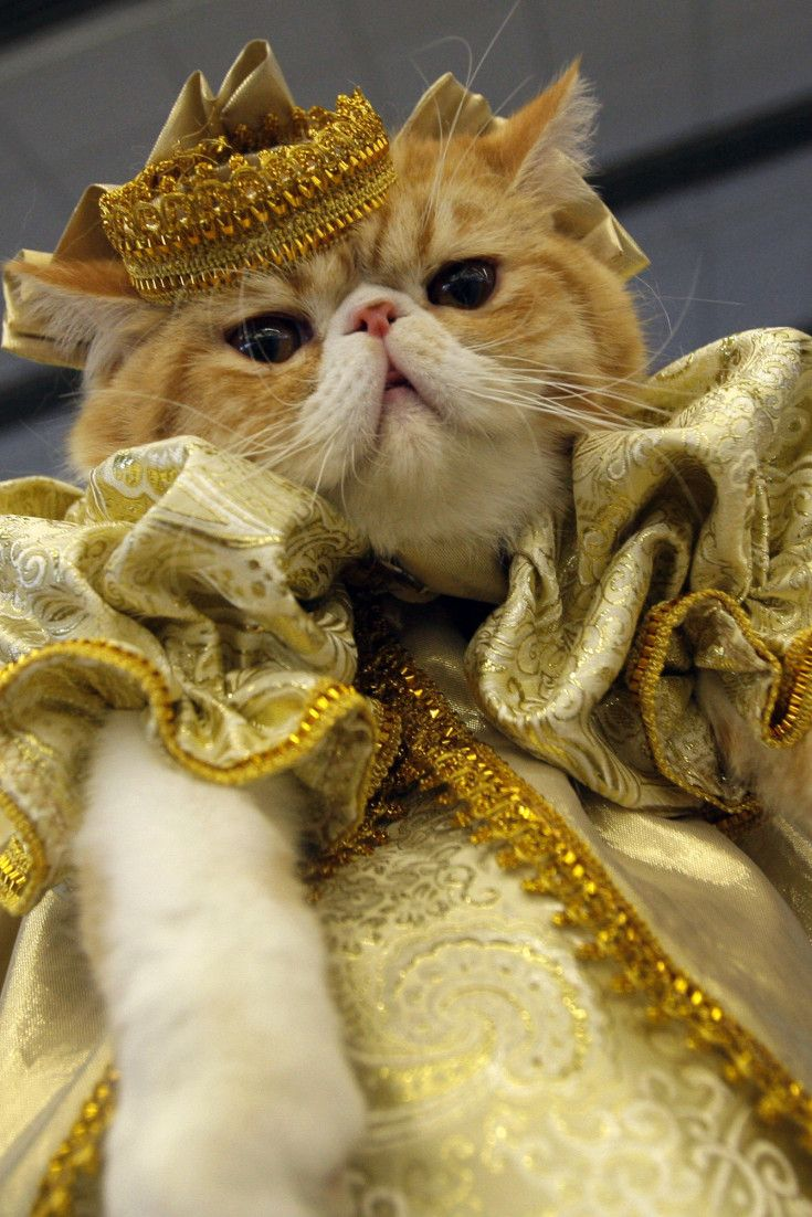 19 Dramatic Animals Who Think All The World S A Stage Cute Cat Costumes Cute Cats Cute Cats And Dogs