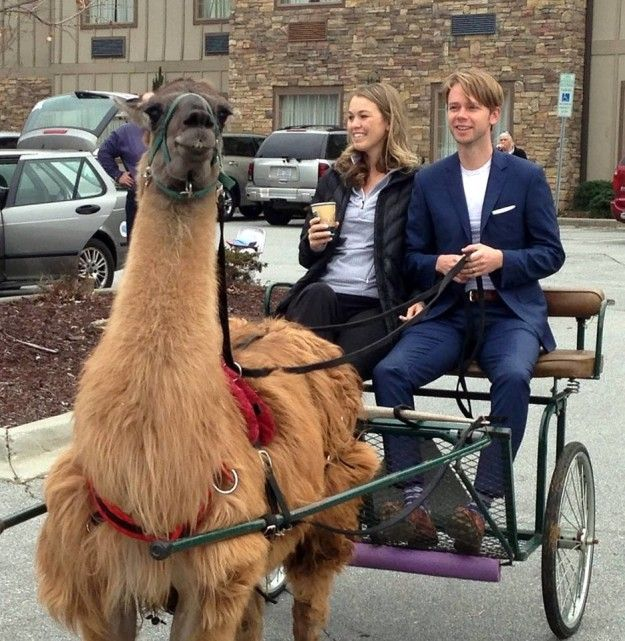 """The """"icing on the cake"""" was riding away in a llama-drawn """"chariot,"""" Kluger said. 