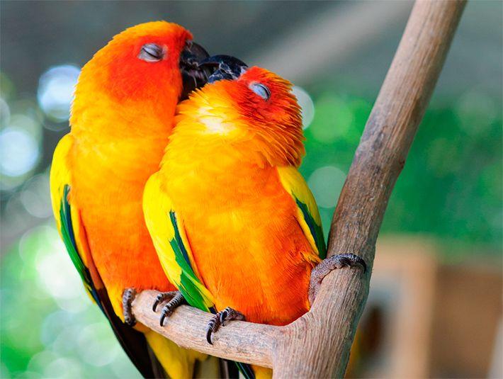 Животные поцелуйчики