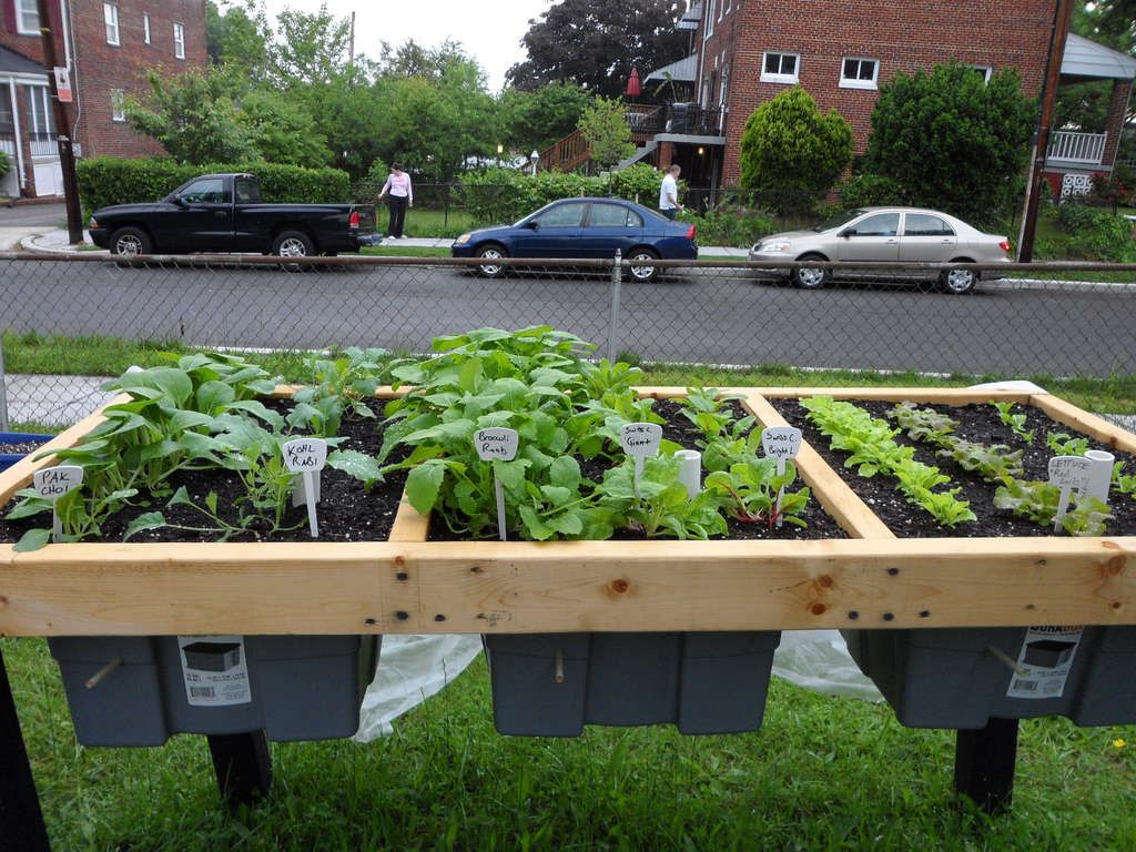 Self watering veggie table potager hauteur et jardins for Amenagement potager idees