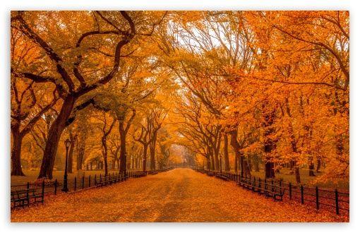 Beautiful Autumn Landscapes Of The World Hd Desktop Wallpaper Widescreen Autumn Landscape Autumn In New York Park Falls