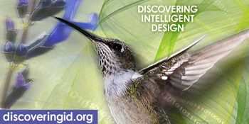 Center for Science and Culture | Discovering Intelligent Design
