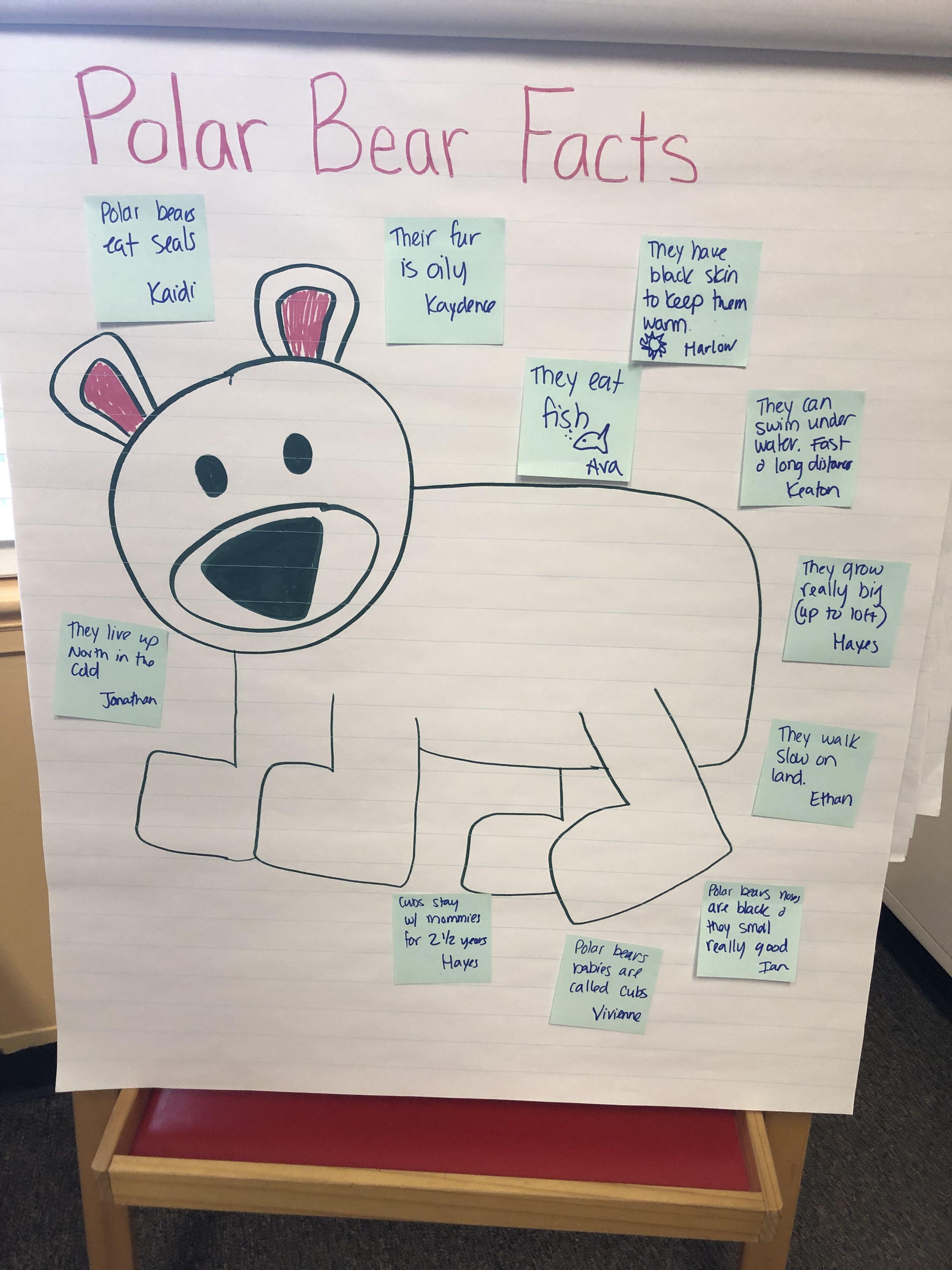 Polar Bear Facts Anchor Chart For Pre K