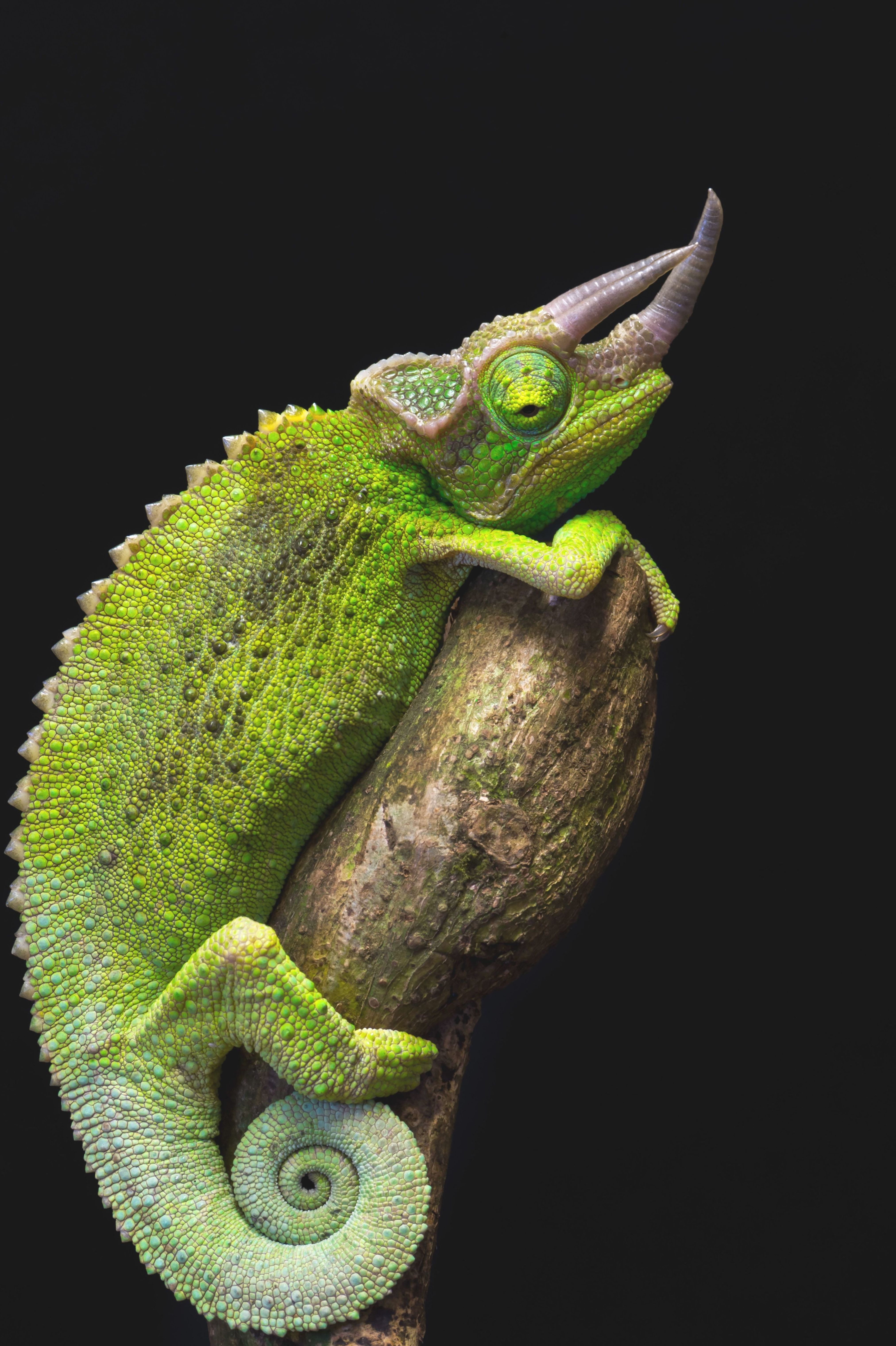 89b8118031418fc1c1d210d5234d5961 - How To Get A Chameleon To Open Its Mouth