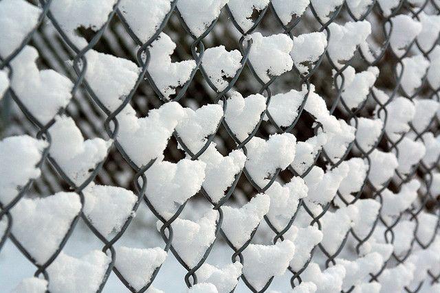 Pañuelos Familia® Chic Metallic. Un Toque Chic que le dará ...   Hearts In Nature Winter