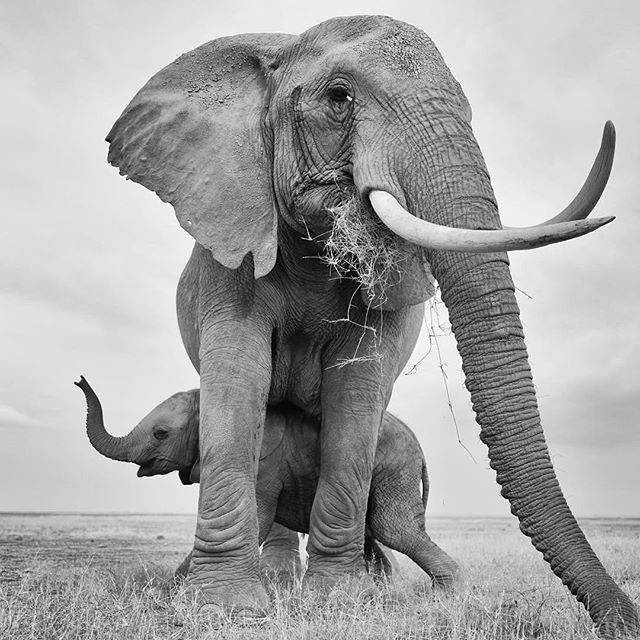 Image result for happy sunday elephants