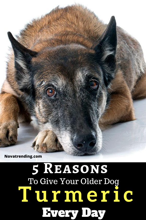 5 Reasons To Give Your Older Dog Turmeric Every Day In 2020 Older Dogs Dog Cancer Dog Quotes