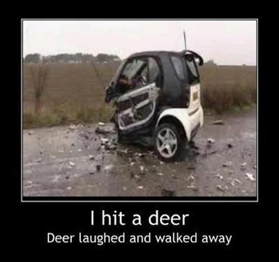 I hit a deer. Deer laughed and walked away.