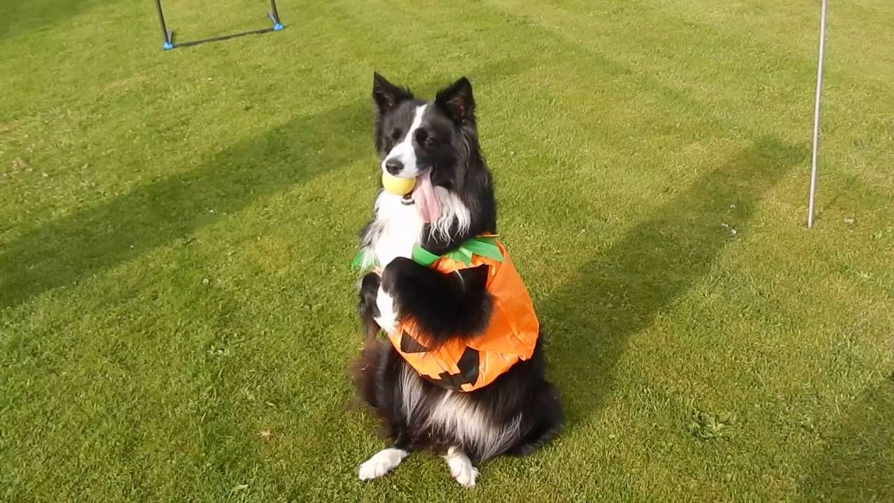 Just A Little Video Of Asha In Her Pumpkin Costume That I Took