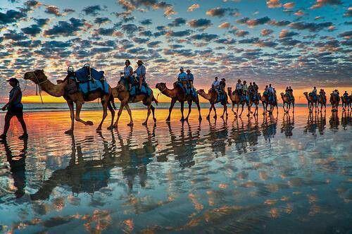 En fila india...hasta el infinito atardecer... #camellos #dromedarios #atardecer #fotografia