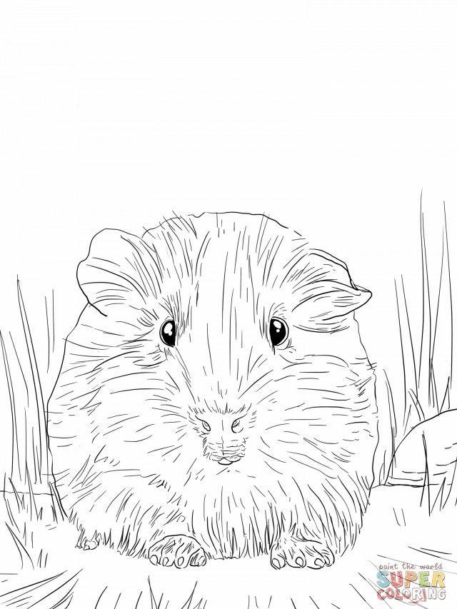 Cute Guinea Pig Portrait Coloring