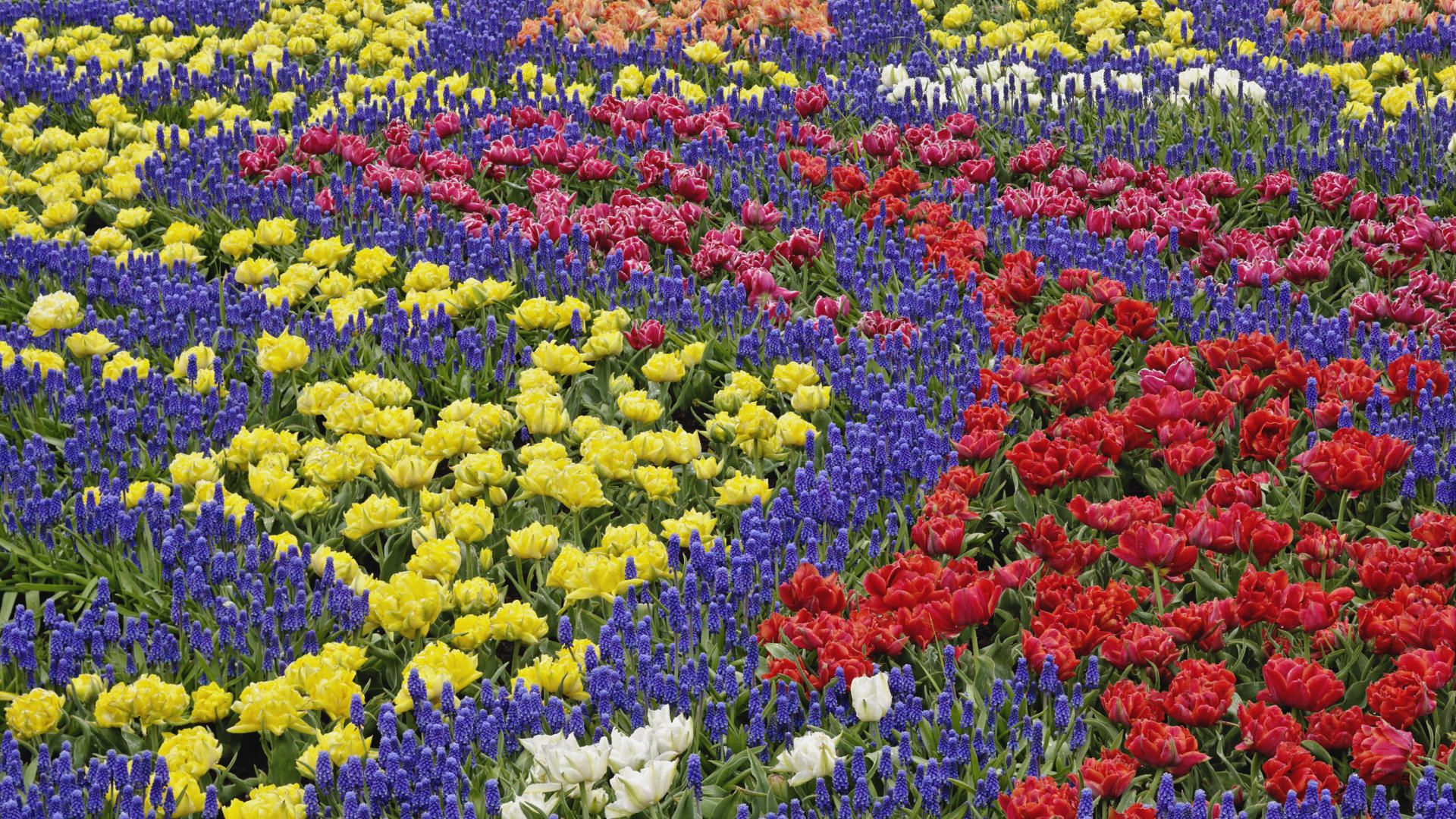 Most Beautiful Flower Garden In The World Dubai You Can Get More