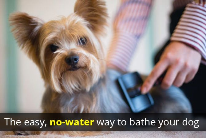 Give Your Pet A Mess Free Bath With Baking Soda Yorkie Pet