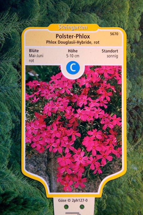 polster phlox rot garten pflanzen f r meinen garten plants for my garden pinterest. Black Bedroom Furniture Sets. Home Design Ideas