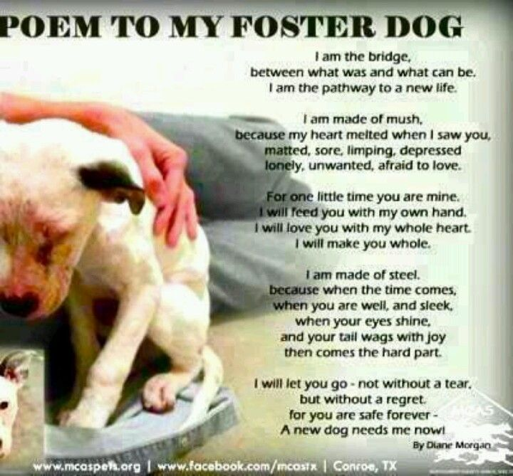 Prayer For My Foster Dog Foster Dog Foster Dog Mom Dog Poems