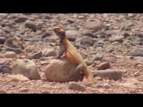 Pin On Reptileset1animaux