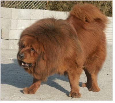 one of the most expensive dogs in the world