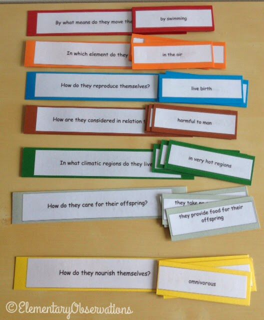 Zoology question and answer game | biology | Montessori elementary