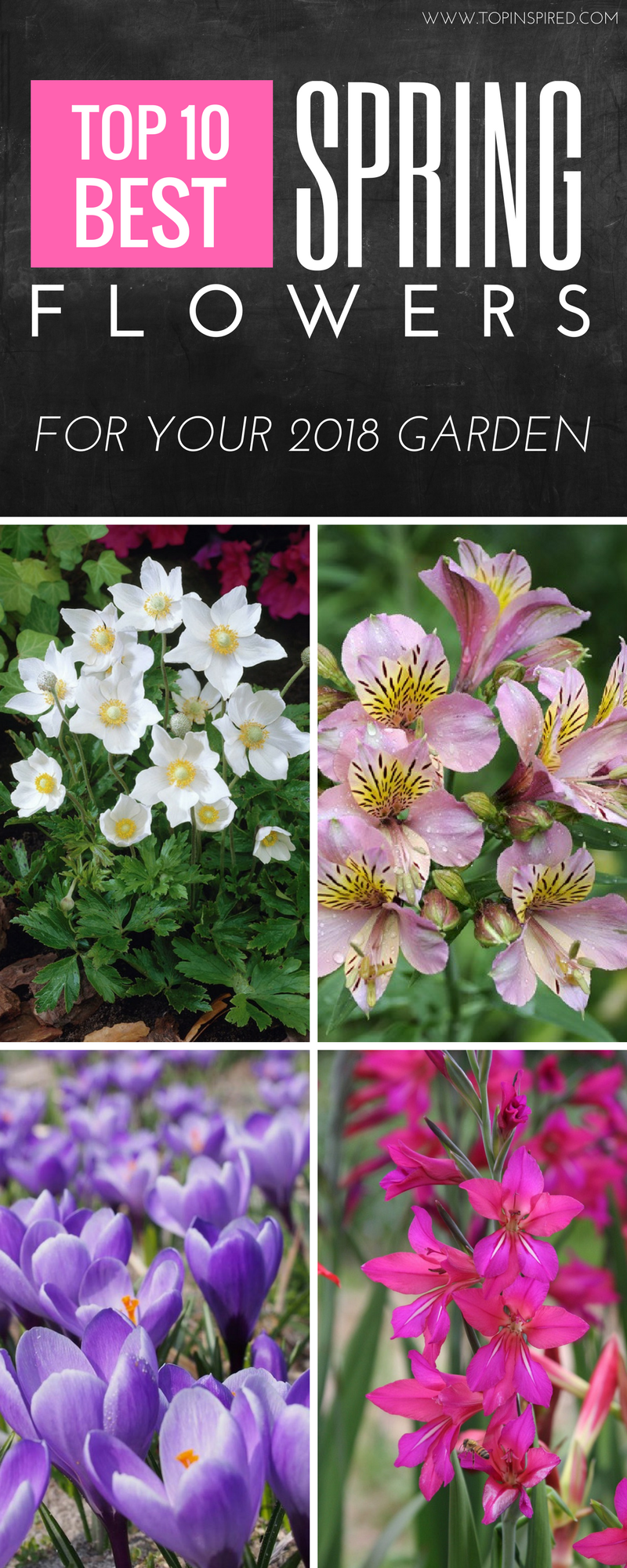 Top 10 Beautiful Spring Flowers For Your Garden Flowers Plants